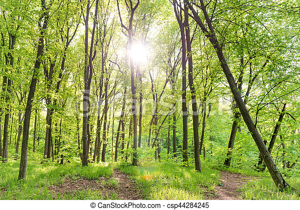 Morning in sunny forest - csp44284245
