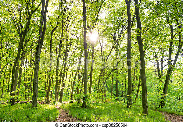Morning in sunny forest - csp38250504