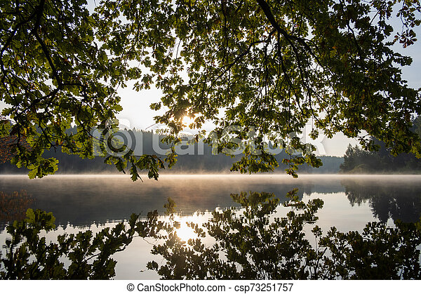 morning in the forest by the lake - csp73251757