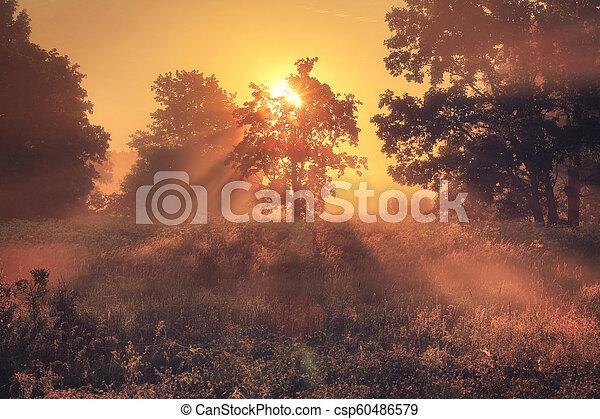 Morning light. Autumn nature. - csp60486579