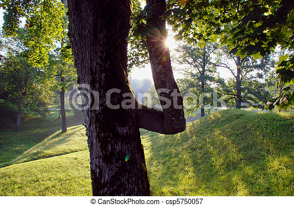 Morning light - csp5750057