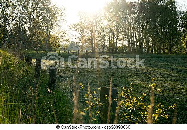 morning light - csp38393660