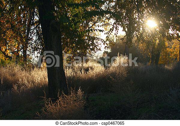 Morning Light - csp0467065