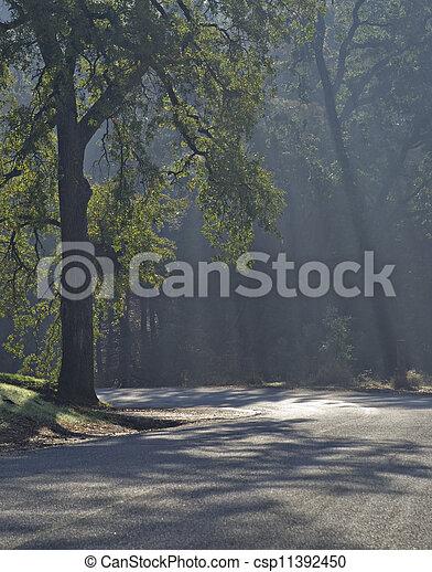 Morning Light - csp11392450