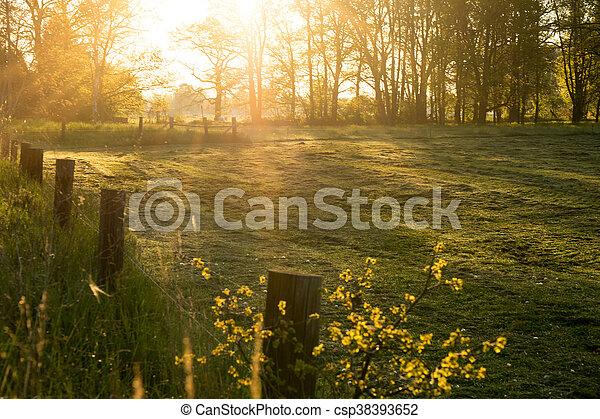 morning light - csp38393652