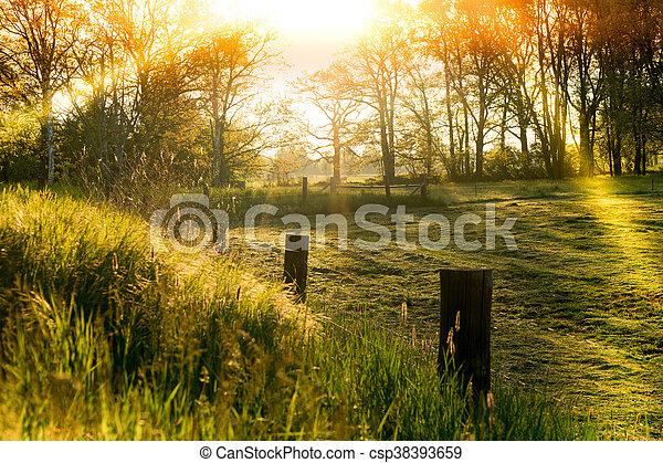 morning light - csp38393659
