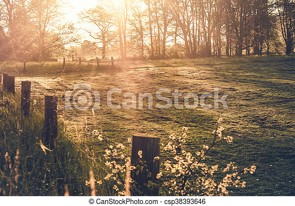 morning light - csp38393646