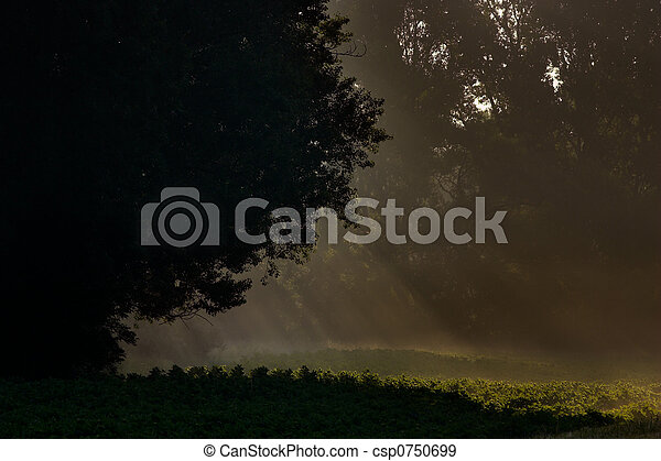 Morning light - csp0750699