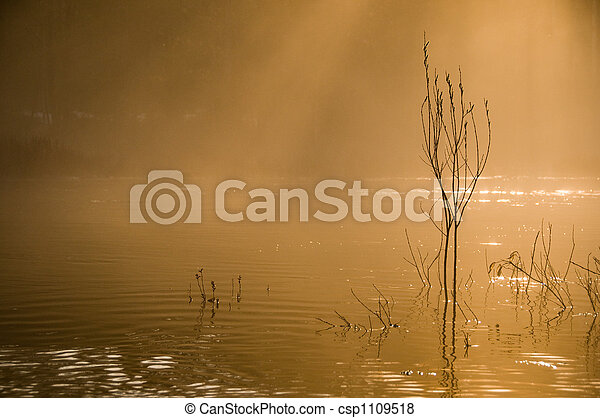 Morning Mist - csp1109518