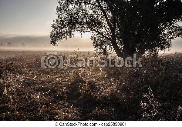 Morning on the bank of autumn lake - csp25830901