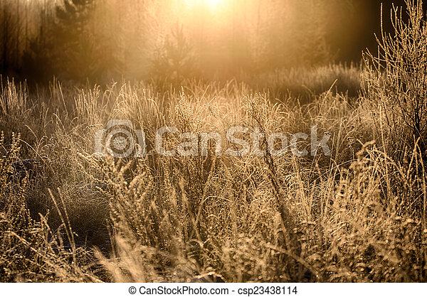 morning sun - csp23438114
