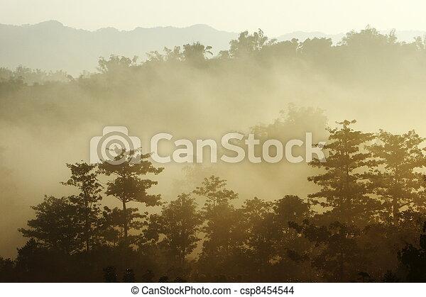 morning sunshine with fog - csp8454544
