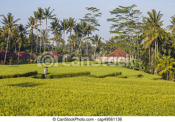 Morning View Of Green Rice Terraces And Background Of Coconut Palm Trees And Houses In Ubud Island Bali Indonesia