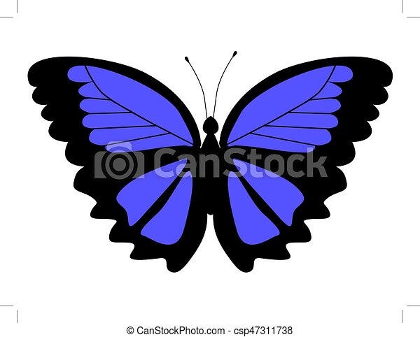 morpho butterfly - csp47311738