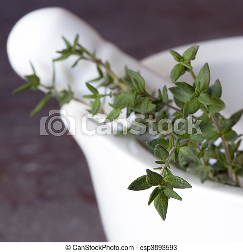 Mortar and Pestle with Thyme - csp3893593