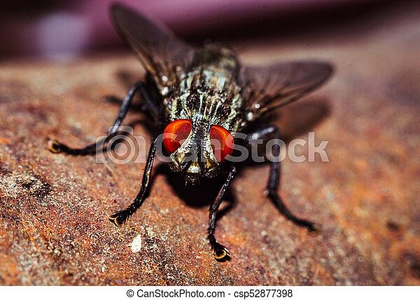 mosca, casa, fine - csp52877398