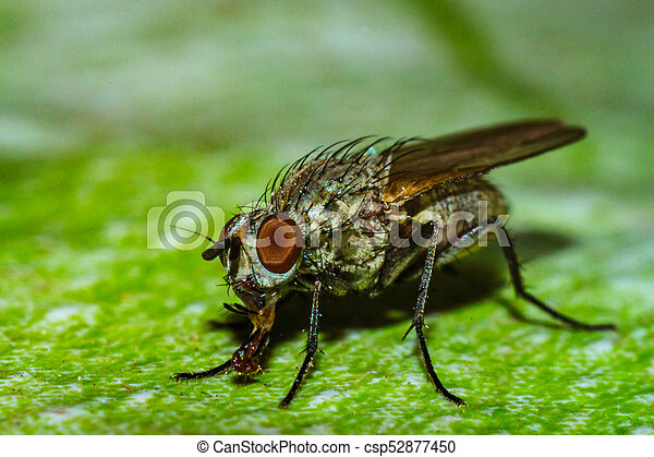 mosca, casa, fine - csp52877450