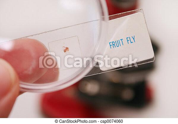 Mosca, fruta.