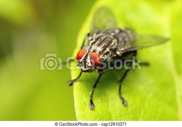 Cerca de una mosca - csp12910371