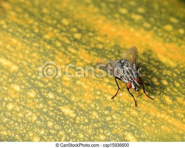 mosca, primo piano - csp15936600