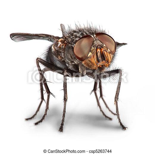 mosca, primo piano - csp5263744