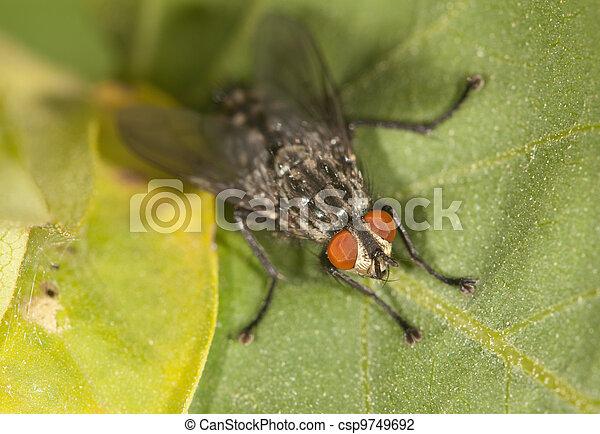 mosca, primo piano - csp9749692
