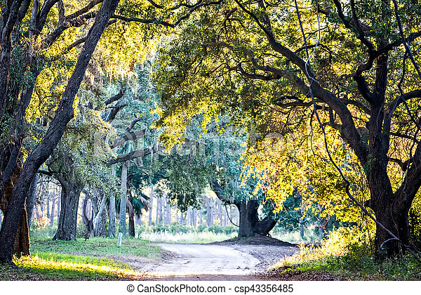 Moss draped Live Oak over the Edisto River at Botany Bay Plantation in South Carolina - csp43356485