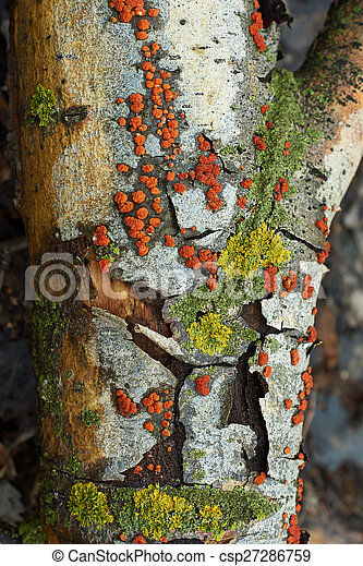 Moss on a dry tree . - csp27286759