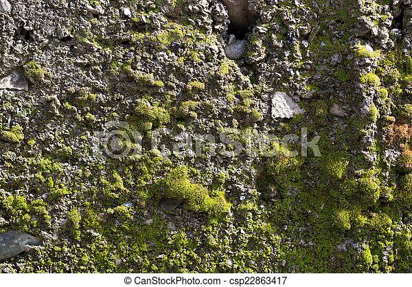 moss on concrete. macro - csp22863417