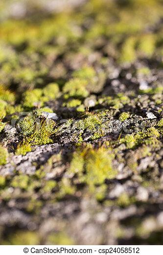 moss on concrete. macro - csp24058512