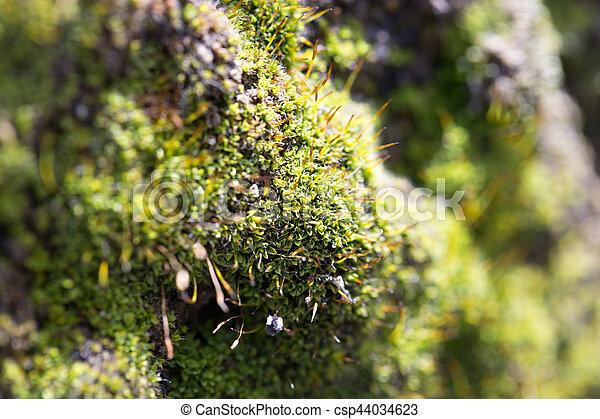 moss on concrete. macro - csp44034623