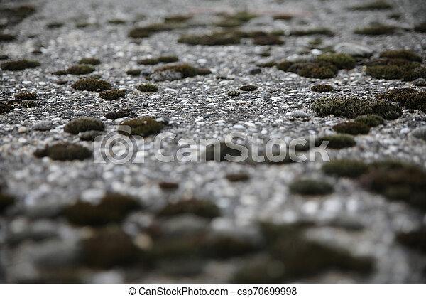 Moss on concrete - csp70699998
