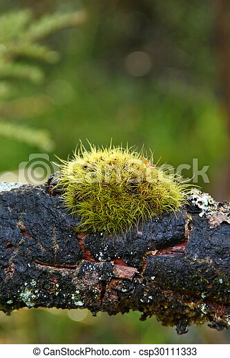 Moss on the Branch - csp30111333