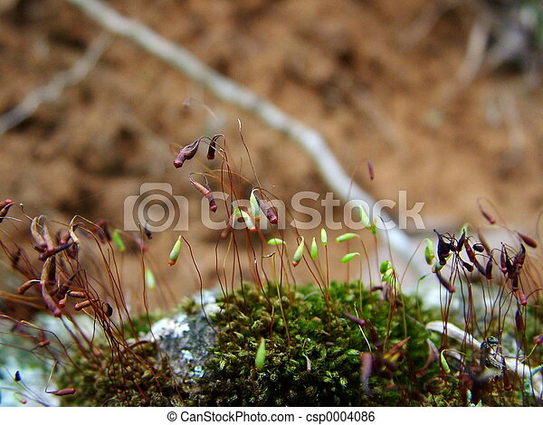 Moss sprouts - csp0004086