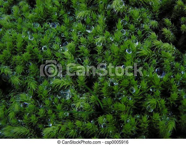 Moss - csp0005916