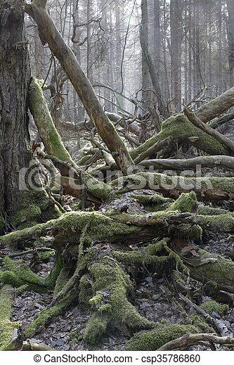 Moss wrapped broken branch lying - csp35786860