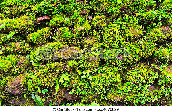 Mosses on the rock - csp4070829