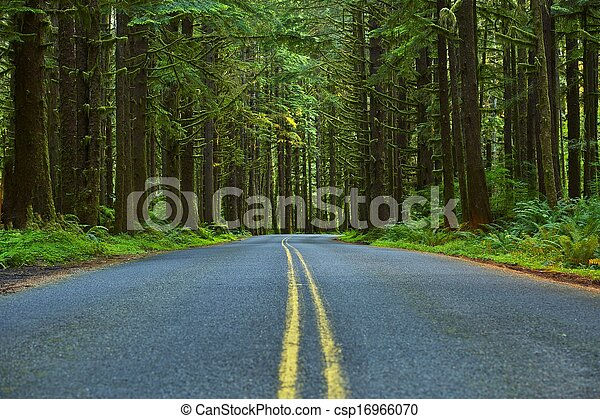 Mossy Forest Road - csp16966070