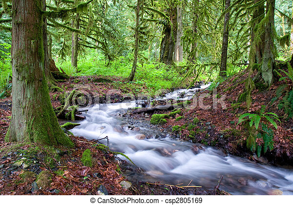 Mossy Forest Stream - csp2805169
