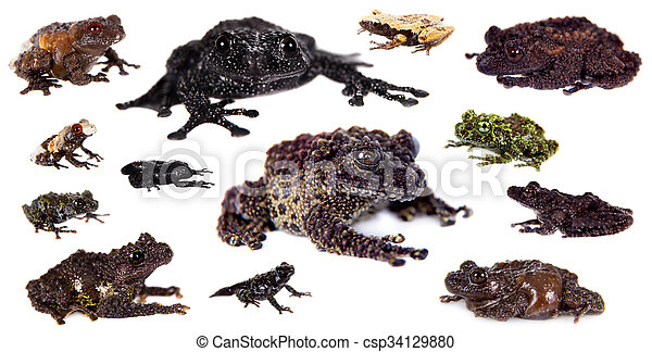 Mossy Frogs set on white - csp34129880