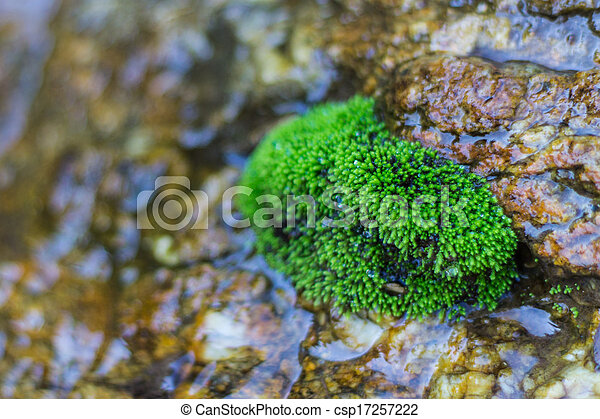 Mossy On The Rock in Water - csp17257222