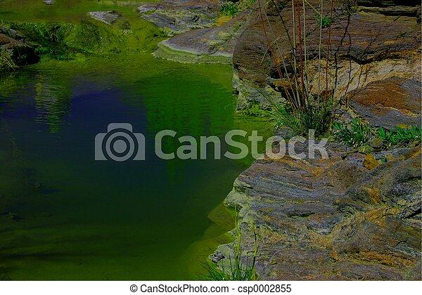 Mossy Pool 4572 - csp0002855