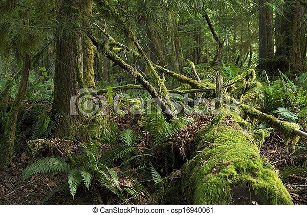 Mossy Rainforest - csp16940061