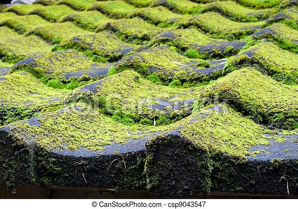 Mossy tiled roof - csp9043547