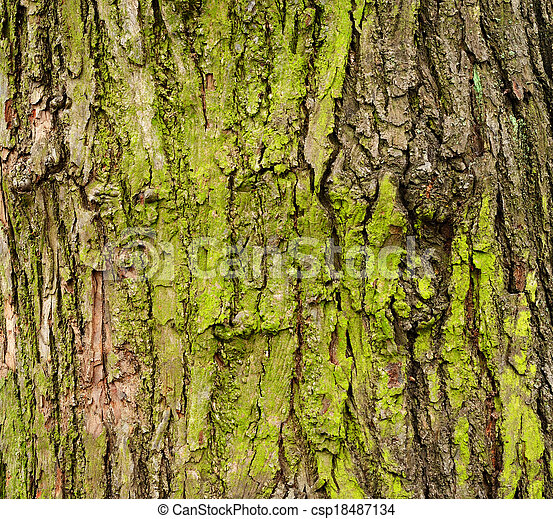 Mossy tree bark - csp18487134