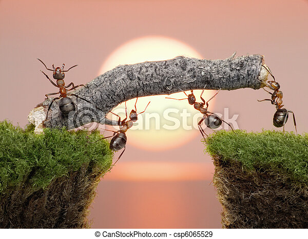 most, konstruowanie, na, mrówki, woda, drużyna, wschód słońca - csp6065529
