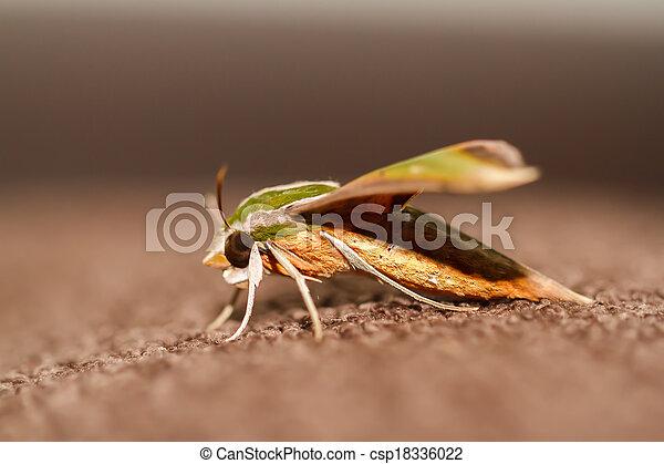 Polilla en la naturaleza - csp18336022