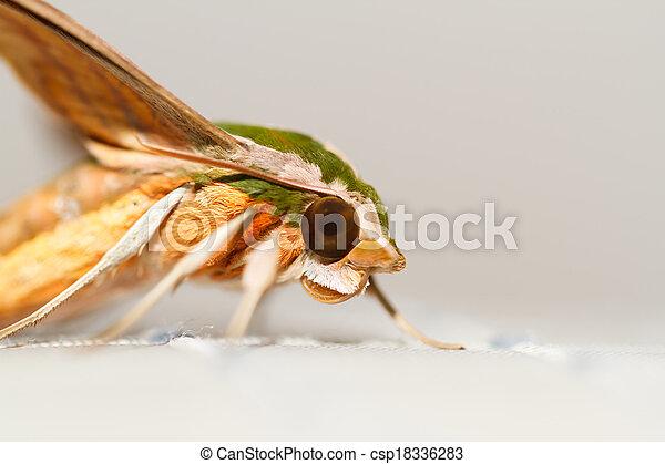 Polilla en la naturaleza - csp18336283