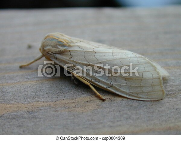 Moth on wood - csp0004309