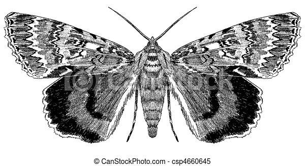 moth, underwing - csp4660645